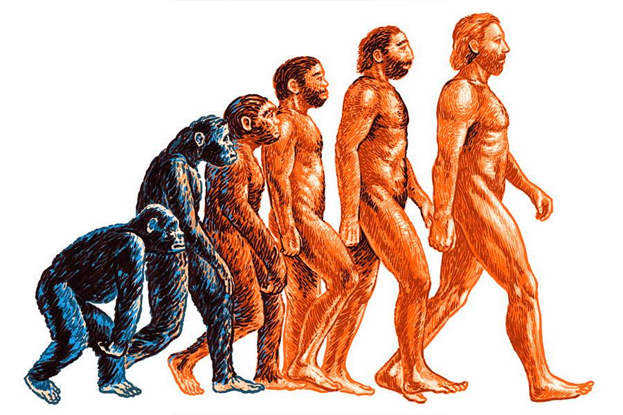 Эволюция по Дарвину
